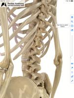 腰痛の横突起に触れる。(2016/03/30)